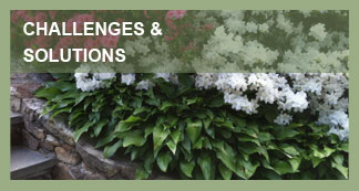 AW Landscapes, Inc. Commercial Services, Challenges & Solutions