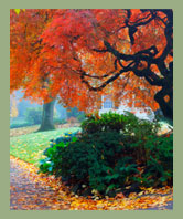 AW Landscapes, Inc. Seasonal Grounds Maintenance, Fall