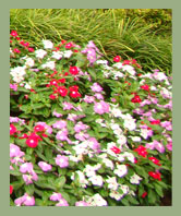 AW Landscapes, Inc. Seasonal Grounds Maintenance, Spring