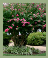 AW Landscapes, Inc. Seasonal Grounds Maintenance, Summer